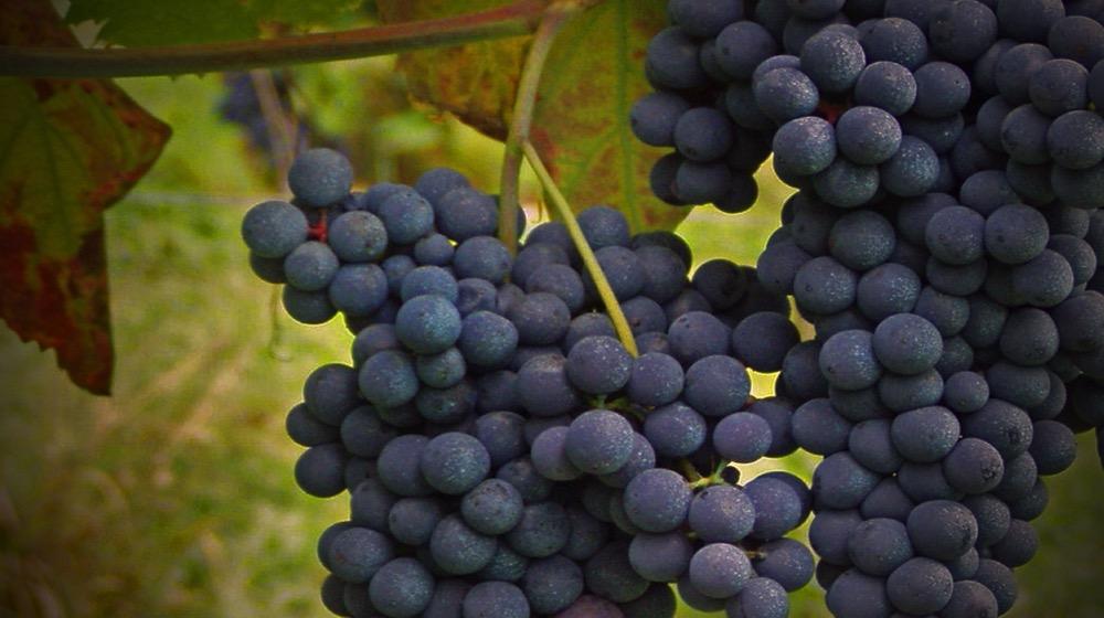 vino karana tempio pausania