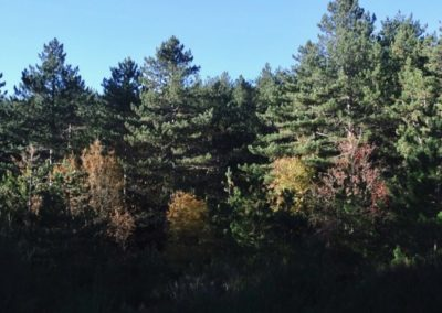 alberi-monte-limbara