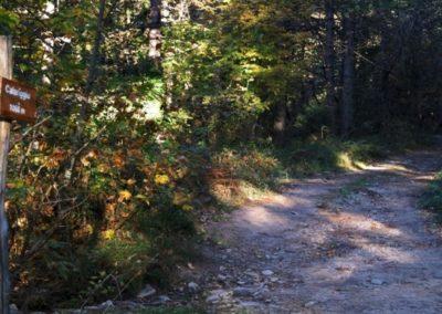 sentiero-calariggiu-limbara